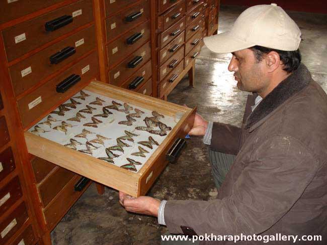 Annapurna Butterfly Museum Pokhara