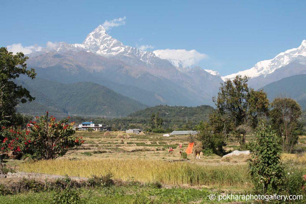 Fishtail Mountain from Pokhara - Hyangja